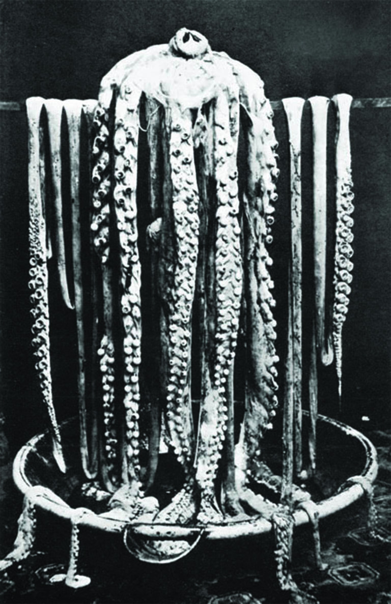 20 Freaky Facts About the Giant Squid  Mental Floss
