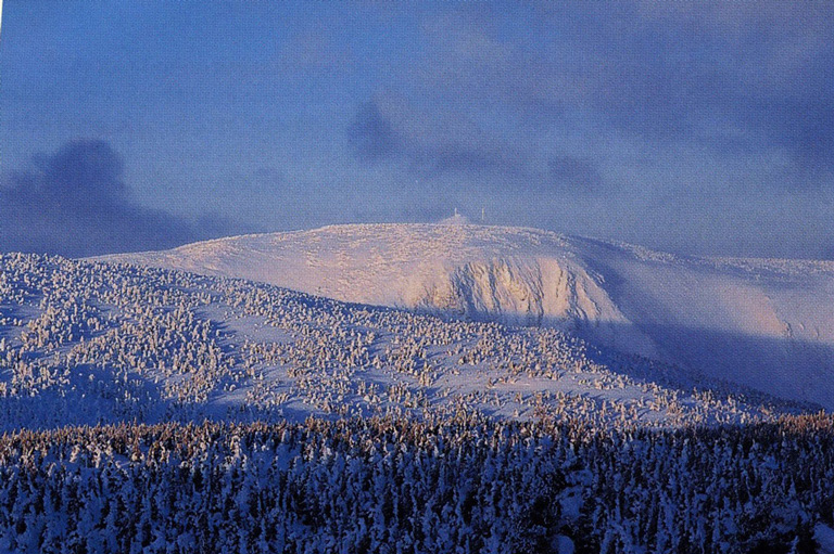 A snowy mountain is shown in the background, with a snow covered forest in the foreground.