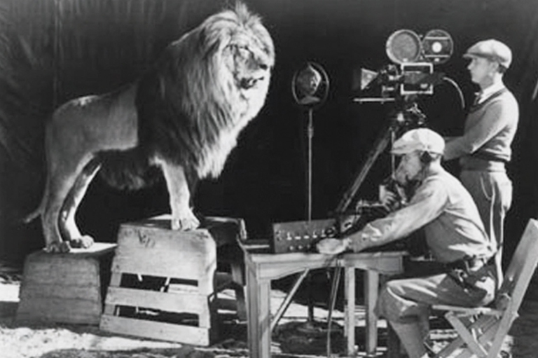 A lion stands on a box looking at a camera, there are two camera men.